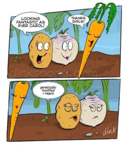 gmo-carrot